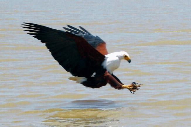 fugle jagten film